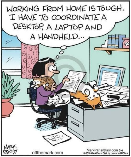 Cats In The Home Office Humor