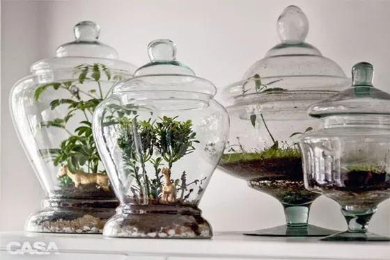 mini jardim terrario:Saiba como montar um mini jardim em potes de vidro