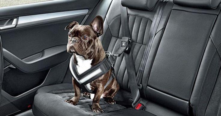 Viajar con nuestro perro en el coche: normativa y consejos de seguridad.