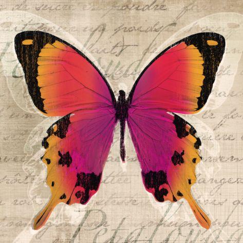 Butterflies III by Tandi Venter. Art print from Art.com.