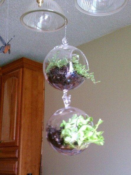 17 Best images about Herb Gardening on Pinterest Gardens