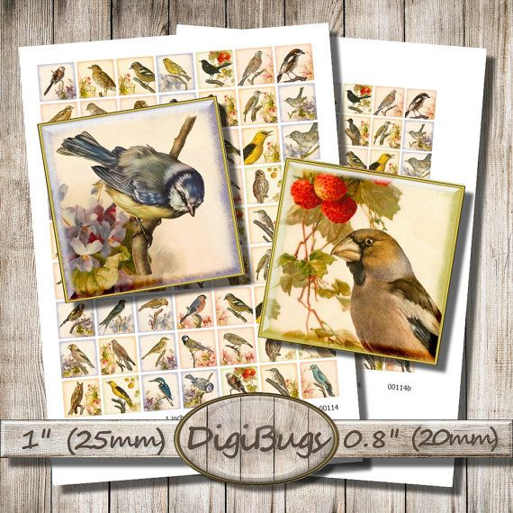 Vintage Bird Images, Printable Floral Paper, Digital Collage Sheet, 1 inch Squares, 20 mm, 25 mm, Bird Decoupage Paper, Instant Download, a1