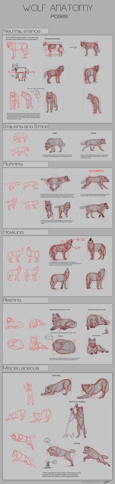 Wolf Anatomy - Part 2 by *Autlaw on deviantART || CHARACTER DESIGN REFERENCES | Find more at https://www.facebook.com/CharacterDesignReferences if you're looking for: #line #art #character #design #model #sheet #illustration #best #concept #animation #drawing #archive #library #reference #anatomy #traditional #draw #development #artist #how #to #tutorial #conceptart #modelsheet #animal #animals #dog #wolf #fox #dogs
