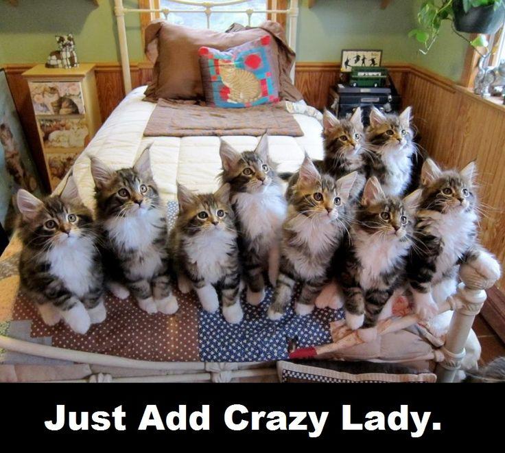 Funny Cat Lady Meme : Top best pics of the crazy cat lady meme photos