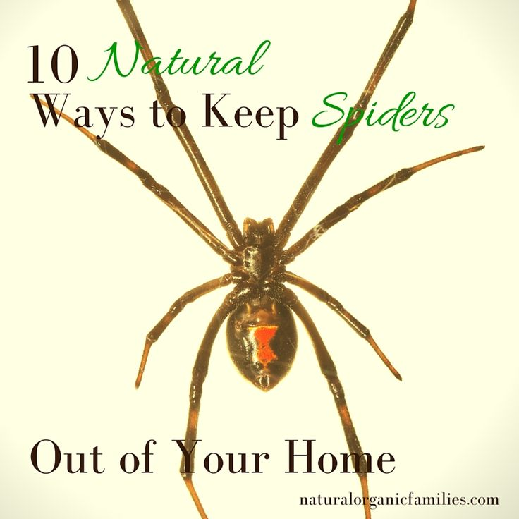 25+ Best Ideas About Keep Spiders Away On Pinterest