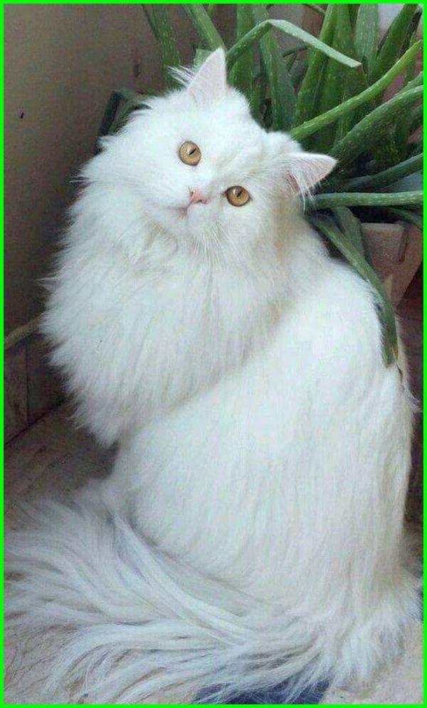 Download 63+  Gambar Kucing Yang Cantik Paling Keren Gratis