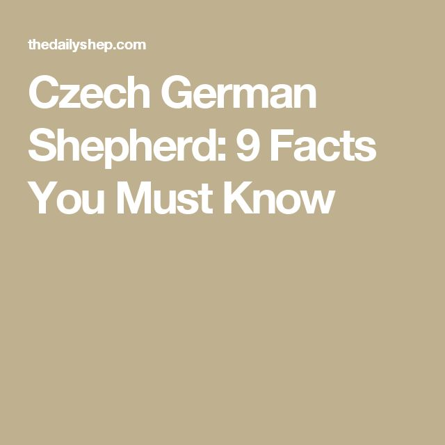 Czech German Shepherd: 9 Facts You Must Know