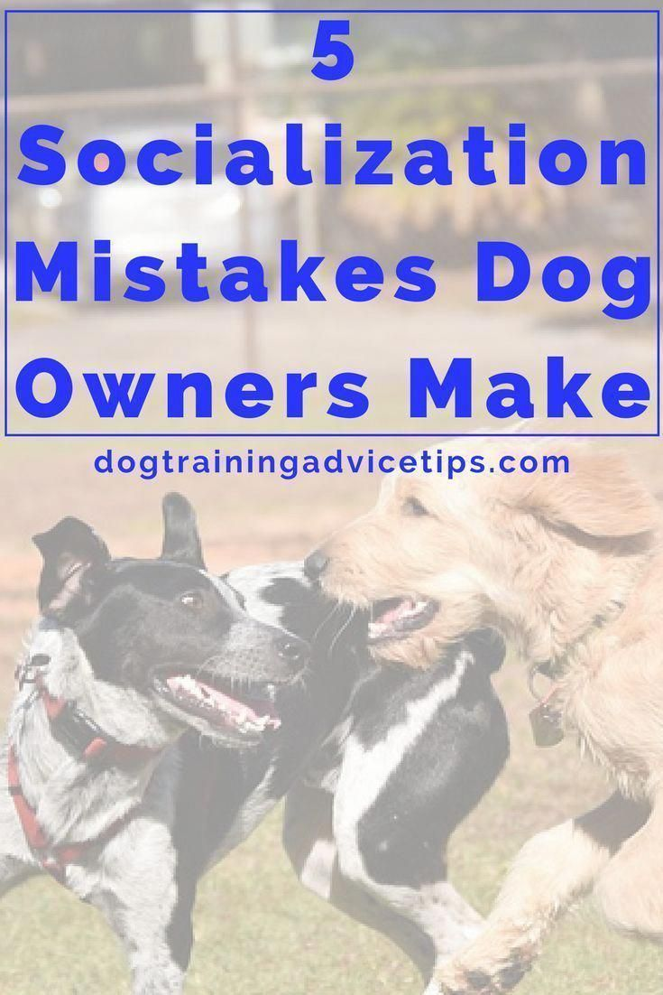 5 Socialization Mistakes Dog Owners Make Dog Training Dog