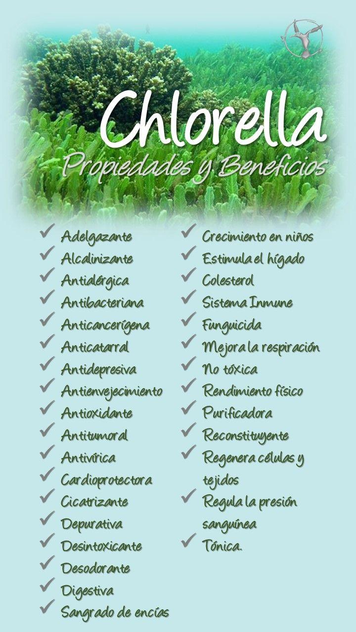 Chlorella Propiedades Beneficios Alga Candida Clorella Y Espirulina Piel Efectos Para Niños Vegan Vegano Vegana Superalimentos Salud Espirulina