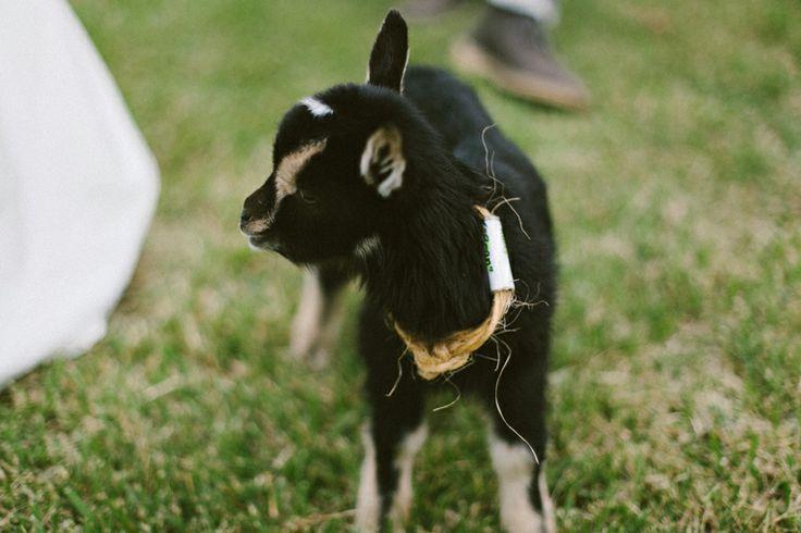 R Goats erin & jason | ...