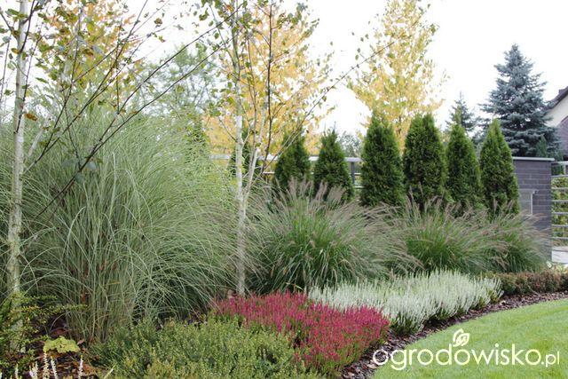 Ogród z lustrem - strona 324 - Forum ogrodnicze - Ogrodowisko