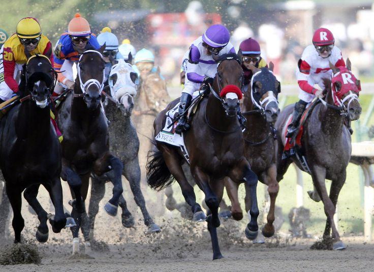 Výsledek obrázku pro nyquist horse