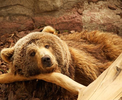 Afla care sunt gradinile zoologice pe care merita sa le vizitezi in Romania si adauga si altele listei noastre!