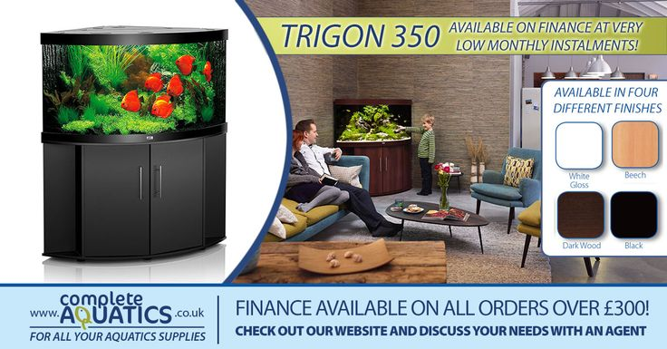 Amazing value Juwel Trigon 350 aquarium. Available in four different amazing finishes! Also available on finance if you spend over £300.