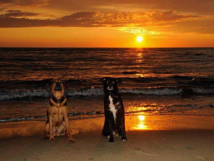 mijn eigen honden moeder en zoon Laika en pluto