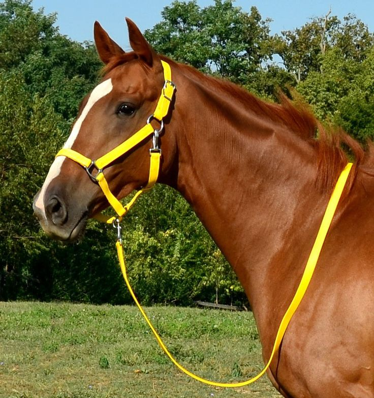 Any Size Yellow Horse Halter Lead for Turnout Show Beta Biothane | eBay