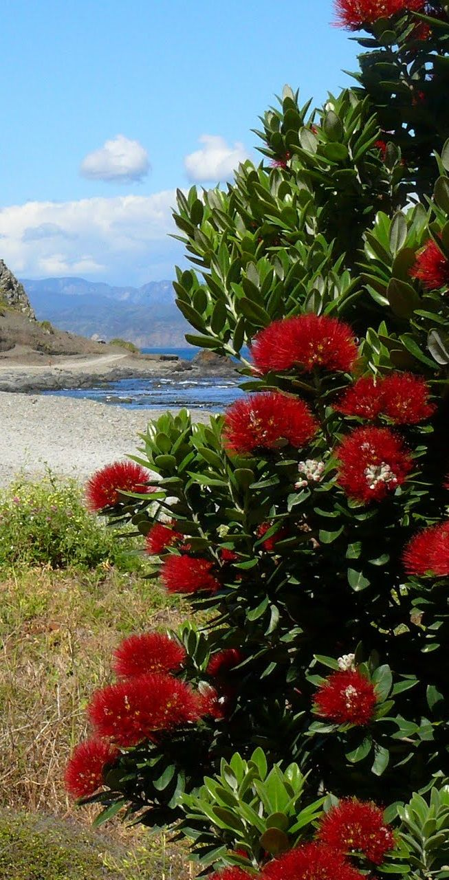 Wellington South Coast NZ
