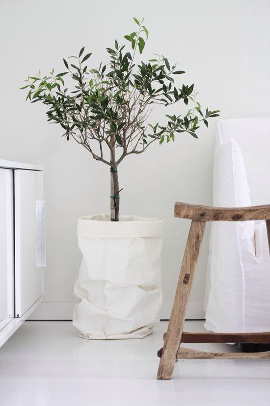 Plant in papieren zak