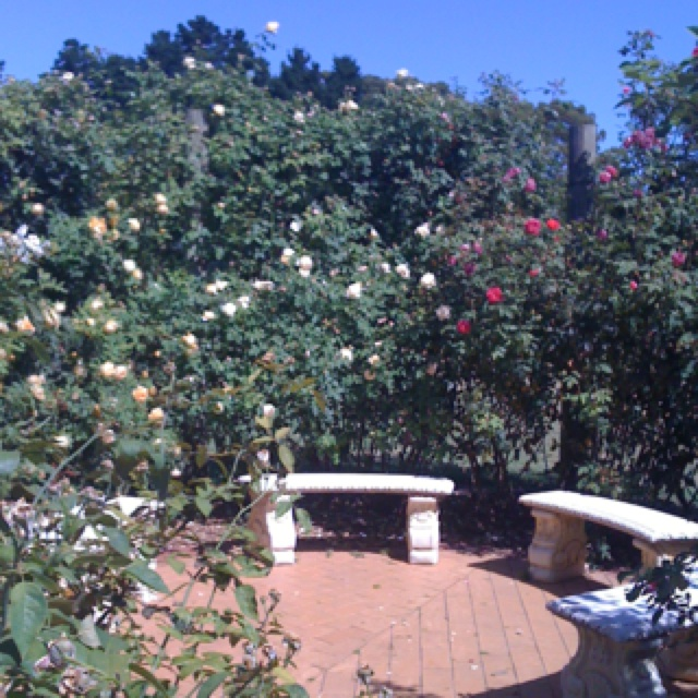 Rose garden, Werribee Park