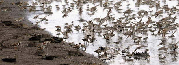 The Horseshoe Crab and Shorebird Festival is May 25th at Milton Memorial Park