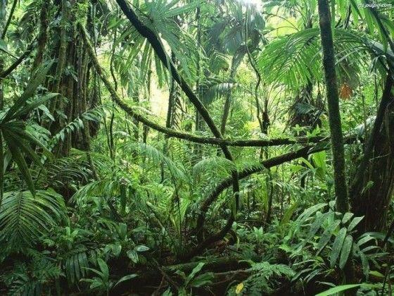 [F] 熱帯雨林。神秘的な感じがする。