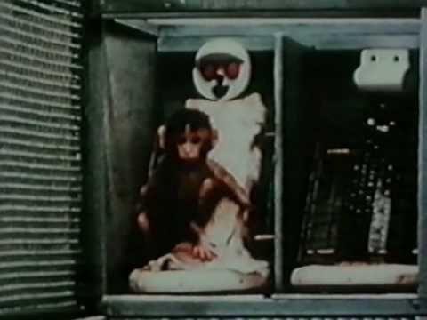 Filmpje>> experiment van harlow hij expermineteerde met jonge aapjes die hij van hun moeder scheidde.