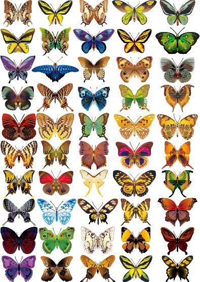 mariposas tipos - Buscar con Google