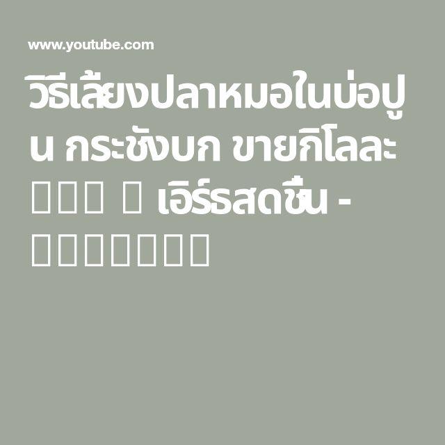 ว ธ เล ยงปลาหมอในบ อป น กระช งบก ขายก โลละ 120 เอ ร ธสดช น Youtube กบ