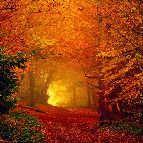 Magical goodness of autumn. Love this! Can't wait for fall!!