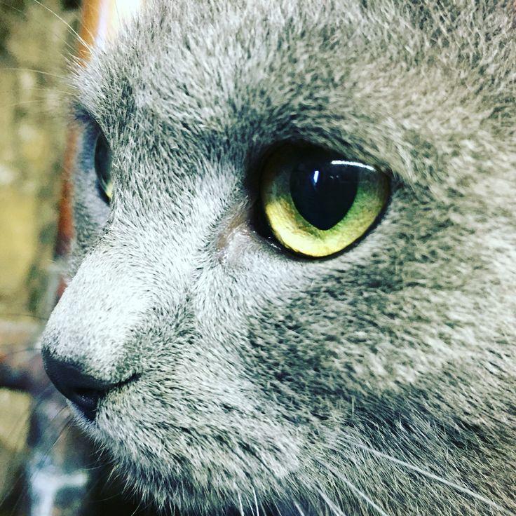 #eyes#cat#mycat#green#greeneyes#