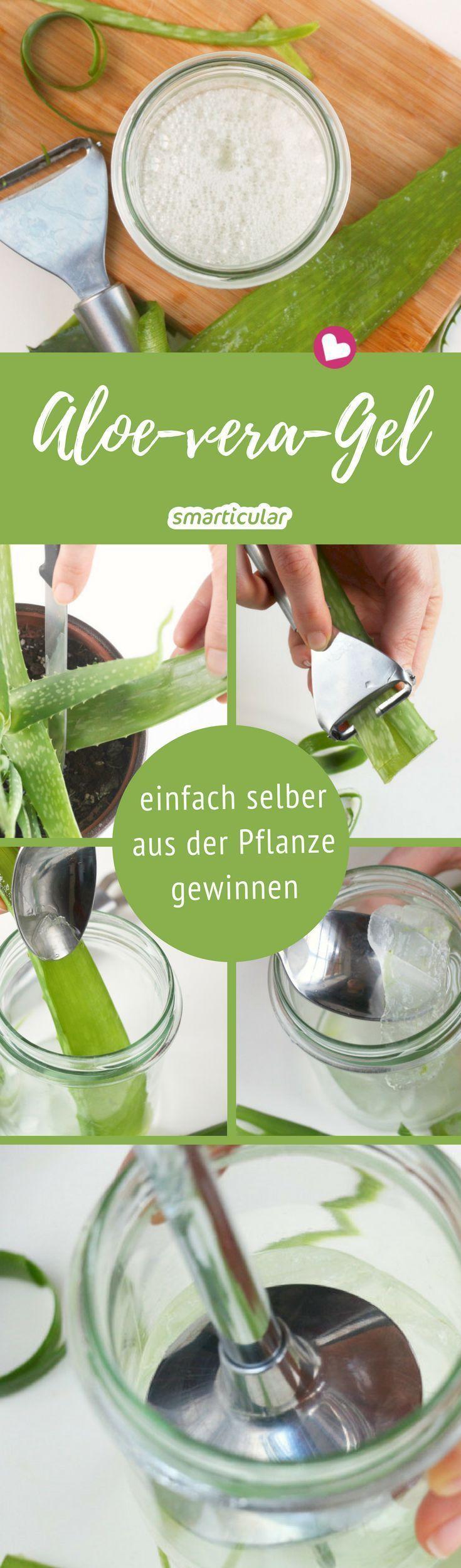 Anstatt Aloe Vera in Form von teuren Cremes aus der Drogerie zu verwenden, können Sie …   – Natürlich Leben mit ätherischen Ölen | Duft-Pins in deutscher Sprache