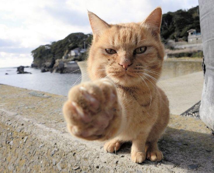 宮城・石巻:冬のもふもふネコ200匹 猫神まつる神社も - 毎日新聞