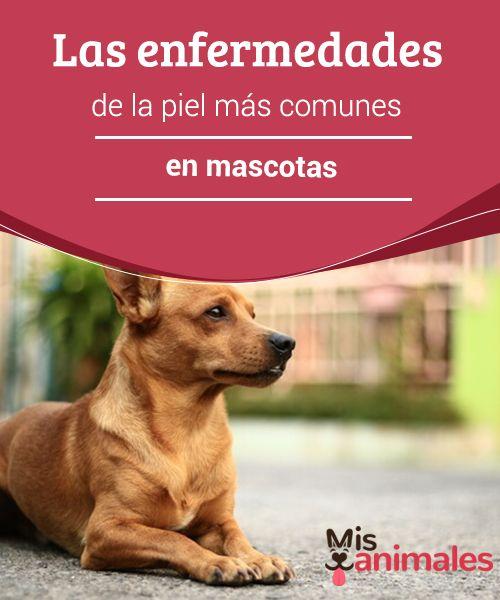 Las #enfermedades de la #piel más comunes en mascotas Quienes tenemos #perros hemos visto alguna vez #síntomas que podrían estar asociados con enfermedades de la piel. Es el caso de las alergias, picores e irritación.