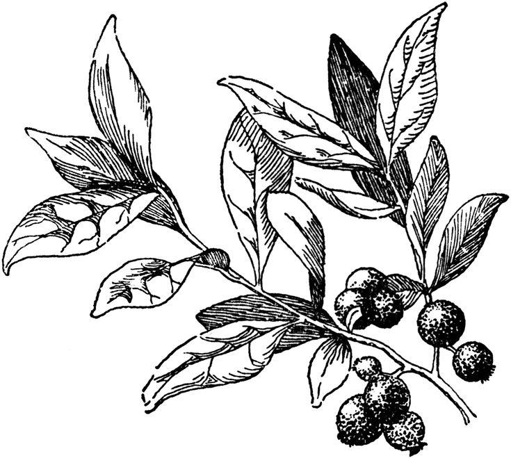 50328_huckleberry_lg.gif (1024×918)
