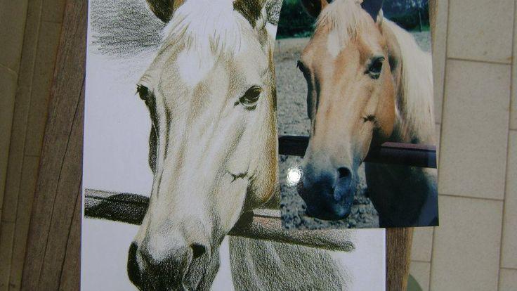 cavallo con foto da cui è stato preso