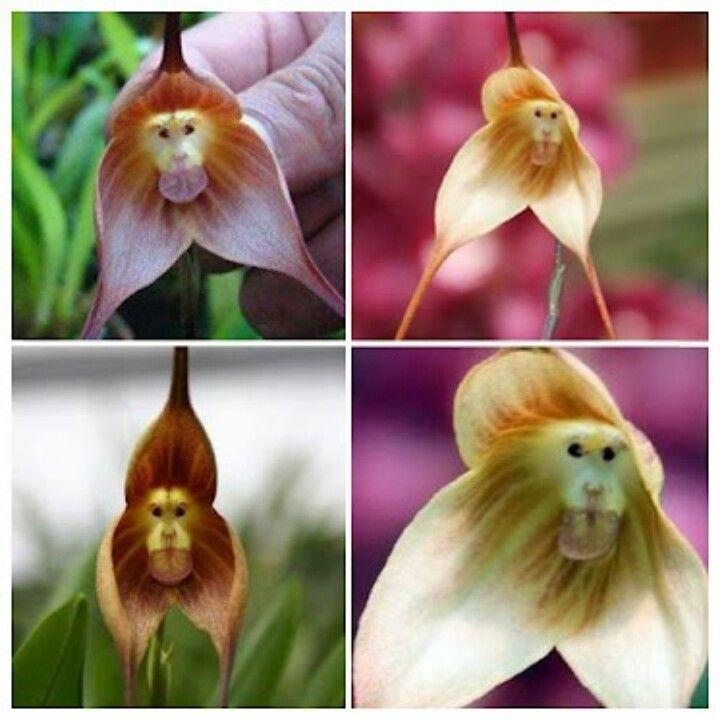 Monkey Flower -- if you look inside a bloom it kind of looks like a monkey
