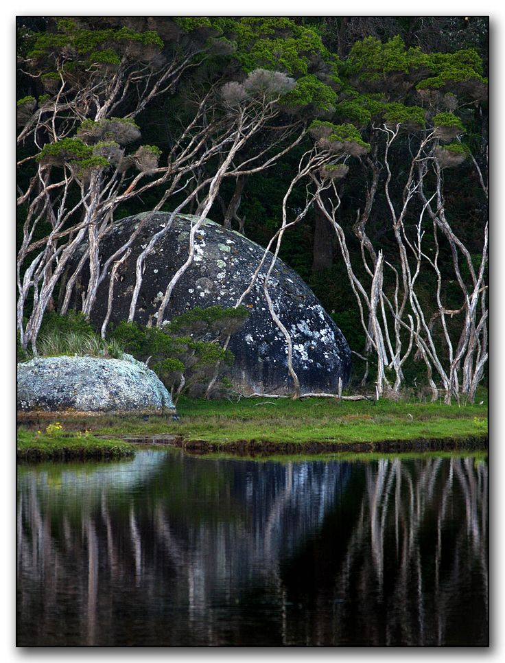 some of my favorite things; sculpted trees and stone, grass and water. The scale of that larger boulder makes this seem more like a landscape within a dream.  Photo taken by Raja Daja, 2007, and titled 'The Trees are Dancers by a Moon Shaped Rock'