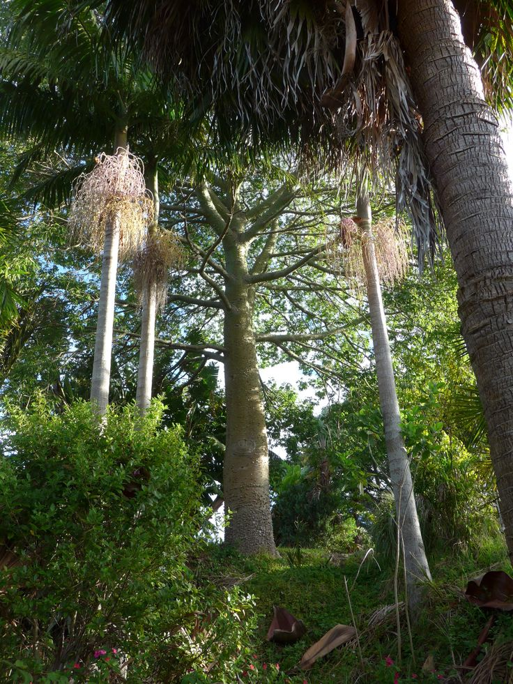 www.accommodation-bay-of-islands.co.nz Established gardens at Wharepuke. NZ
