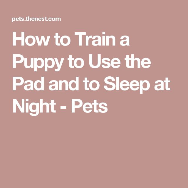 How To Train A Puppy To Use The Pad And To Sleep At Night