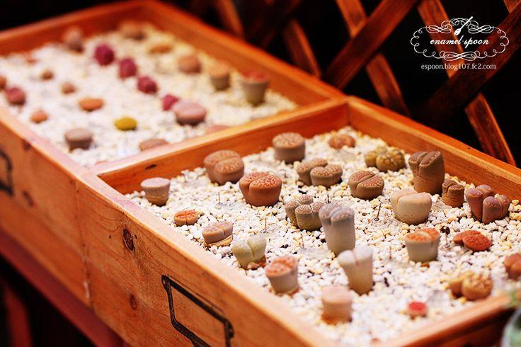 Lithops Cabinet by enamel-spoon