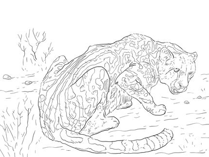 Click To See Printable Version Of King Cheetah Coloring Page