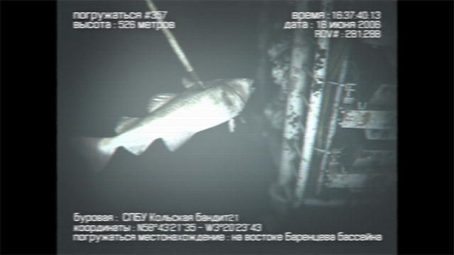 """""""Mermaids: The New Evidence: Oil Derrick Mermaid Sighting : Video : Animal Planet"""" MERMAIDS ARE REAL!!!"""