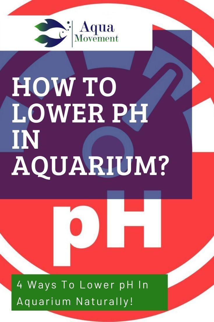 4 Ways To Lower Ph In Aquarium In 2020 Aquarium Bulbous Plants Freshwater Aquarium