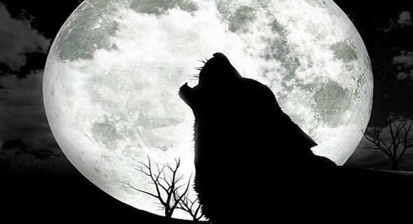 Serigala Pun Mengakui Kenabian Muhammad Saw