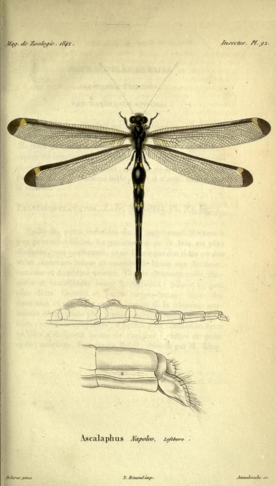 Anatomy of a dragonfly