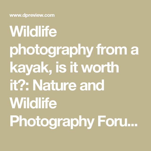 Wildlife photography from a kayak, is it worth it?: Nature and Wildlife Photography Forum: Digital Photography Review