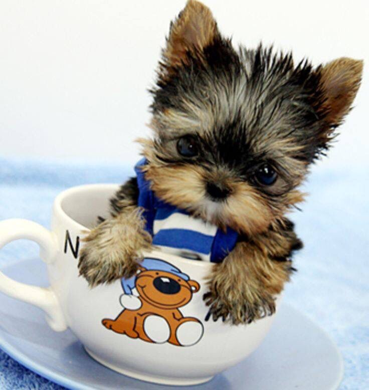 A bowl of cuteness!!