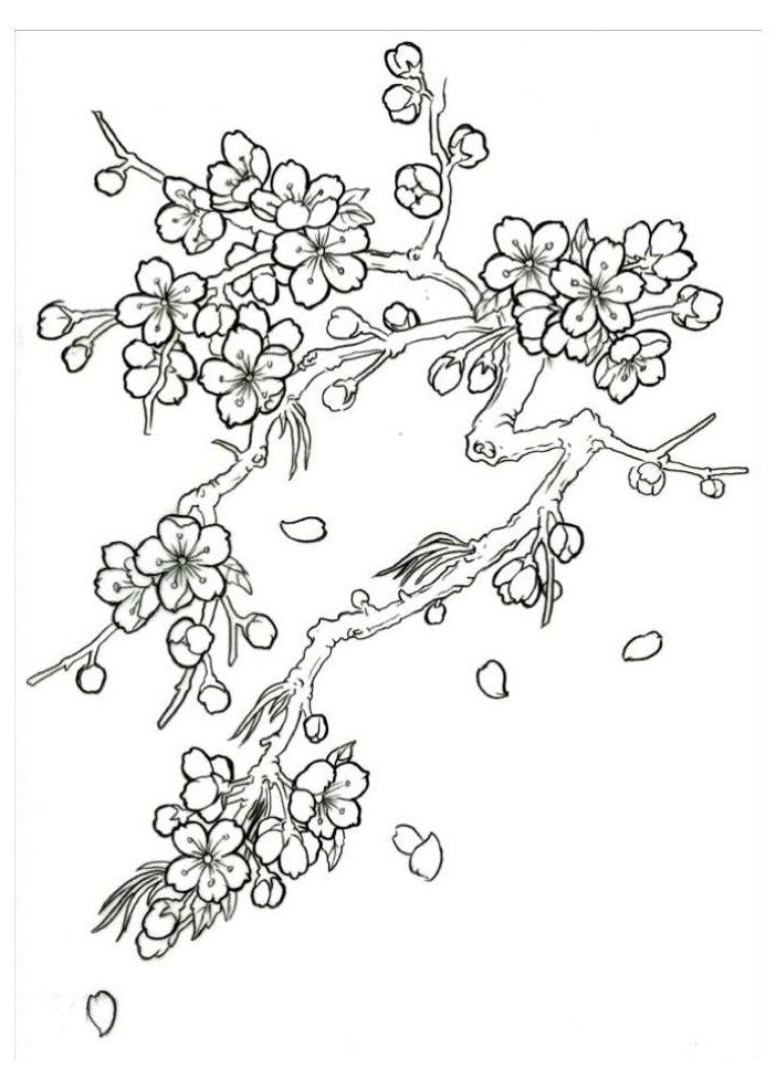 Blossom Tree Drawing Blossomtreedrawing Japanese Cherry Blossom Tree Drawing Sketch Coloring Page Flower Drawing Blossoms Art Cherry Blossom Drawing