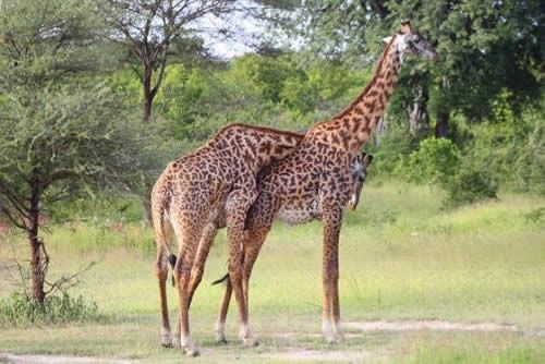 Perfect Luxury Safari Holiday in South Africa