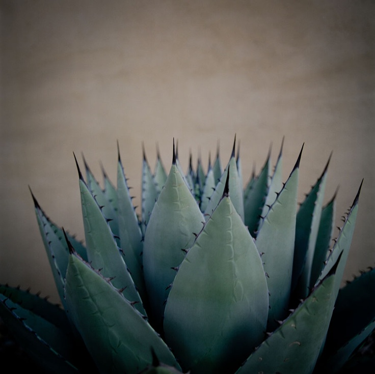 Allison V. Smith, Cactus, Marfa, Texas, 2011